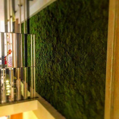Flat-Moss-Moss-Wall