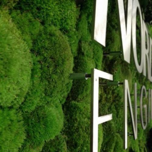 yosun-duvar-dikey-bahce-pole-moss-wall-duvar-bahcem