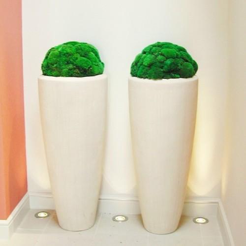 yosun-duvar-dikey-bahce-pole-moss-wall-yosun-duvar