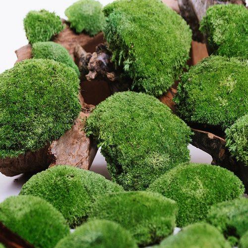 Pole-Moss-Korunmus-Yosun-Pole_Moss-Preserved_moss