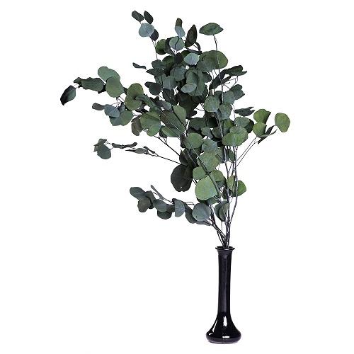 Stabilize Korunmuş Bitkiler